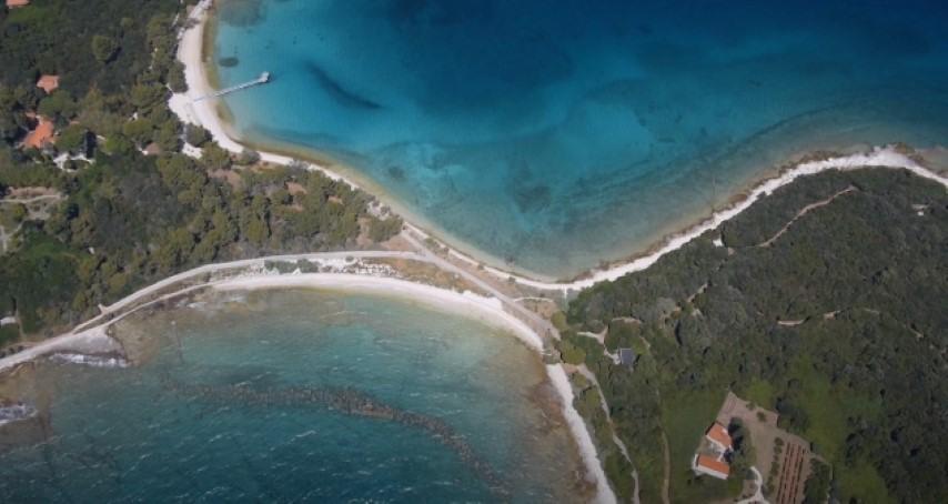 island vanga Small