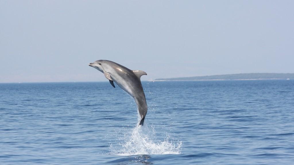dolphin way 636540461942970066 1600 900