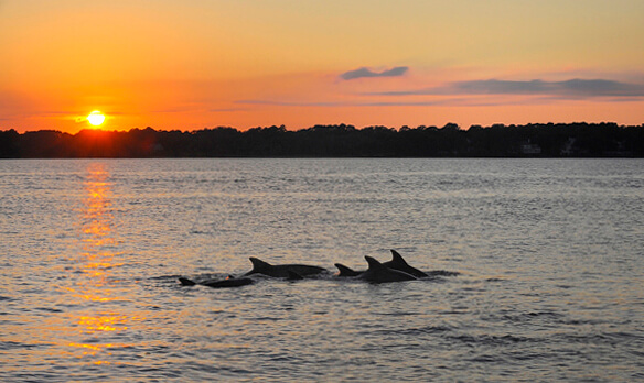 sunset dolphins1